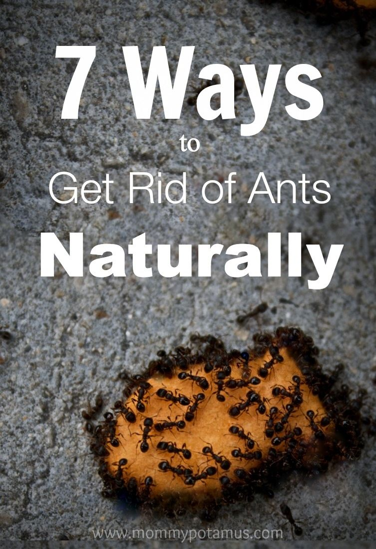7 ways to get rid of ants naturally easy housekeeping astuces fourmis truc. Black Bedroom Furniture Sets. Home Design Ideas