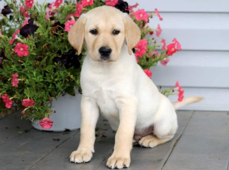 Get A New Puppy Today View Our Adorable Newborn Puppies With