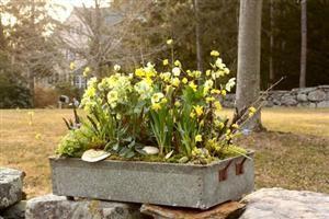 Ideas for a Spring Table Top Garden - The Gardenist