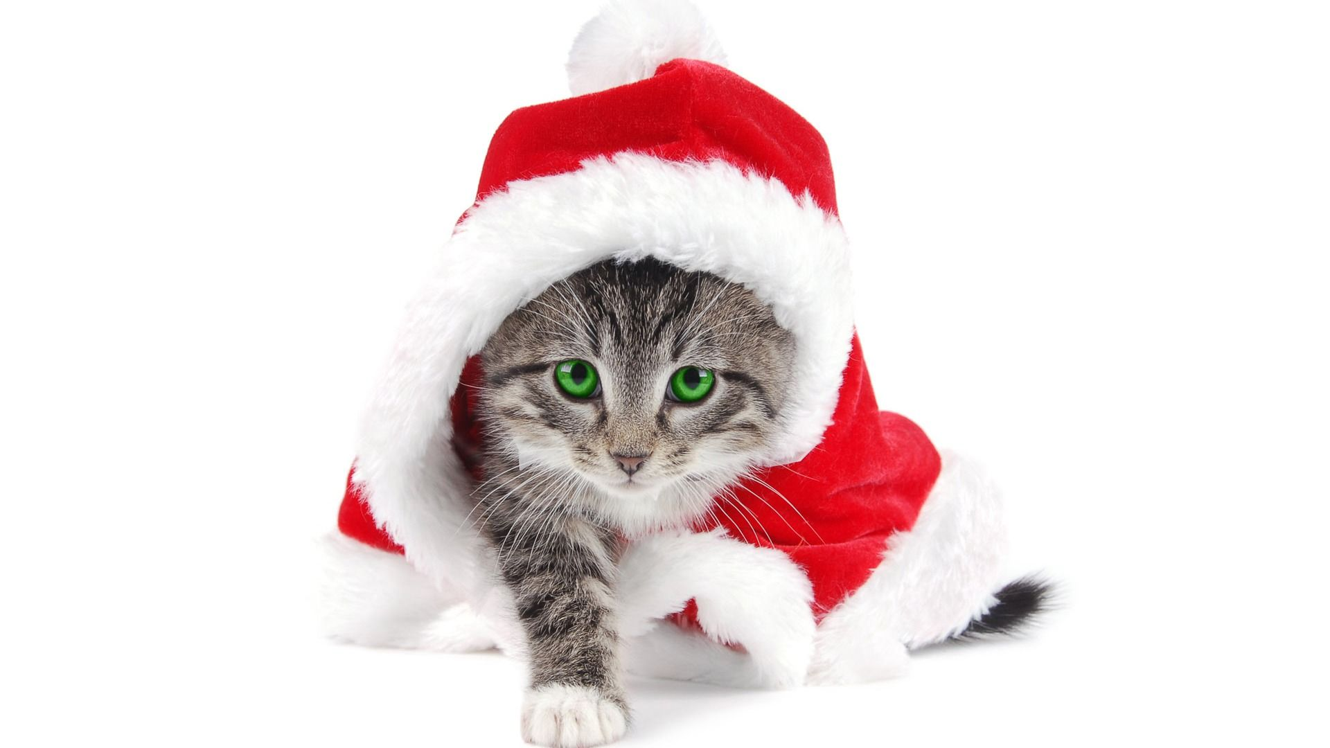 free desktop wallpaper for cat lovers, free christmas wallpapaer
