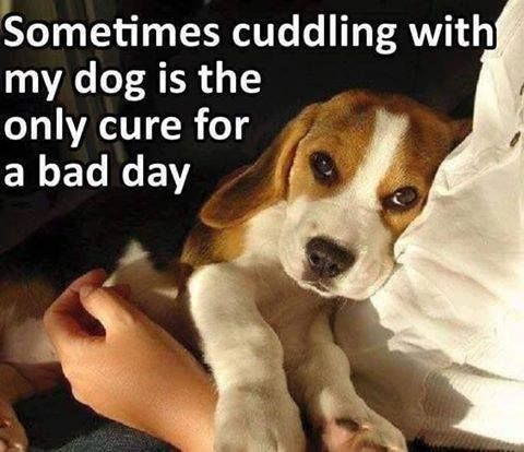 Sometimes Cuddling With Your Dog Is The Only Cure For A Bad Day