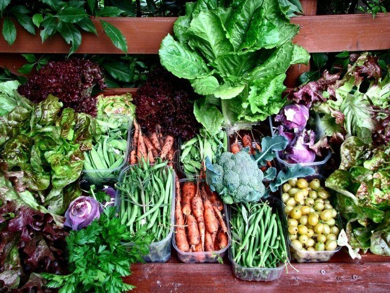 Gemuse Anbauen Auf Dem Balkon Welche Sorten Eignen Sich Am Besten Dafur Gemuse Pflanzen Gefulltes Gemuse Gemuse Anbauen
