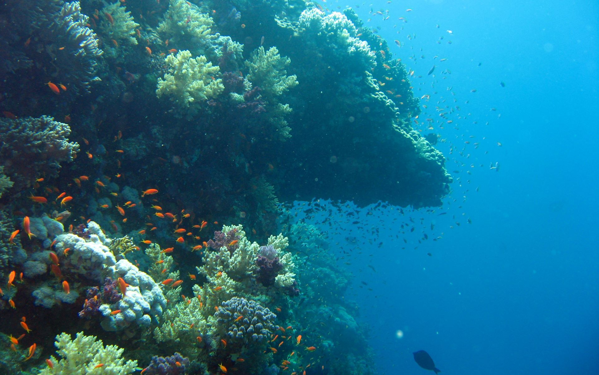 Beautiful Windows 7 Ocean Theme Underwater wallpaper