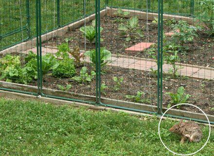 Pin By Dori Richardson On Nmf Garden Fenced Vegetable Garden