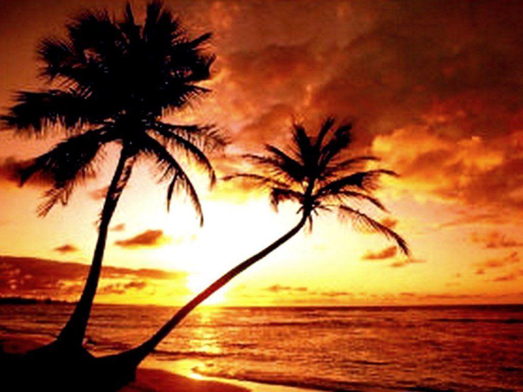 Free Beach Sunset Wallpapers Wallpaper 1920x1200 Tropical 37