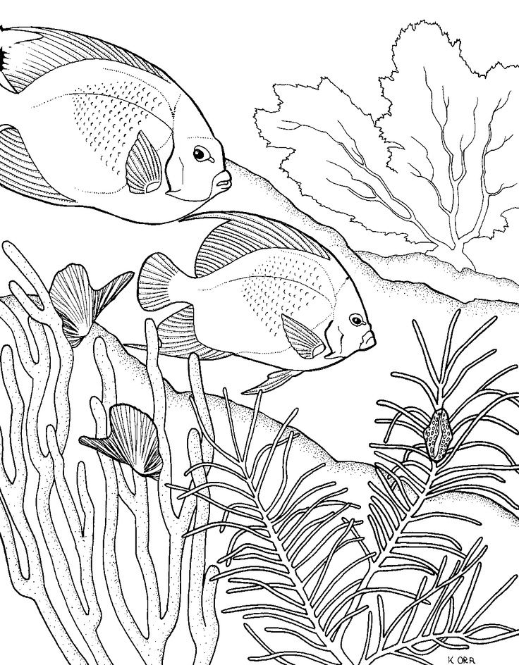 Coral Reef Fish and Sea Turtle coloring page | Free Printable ... | 944x736
