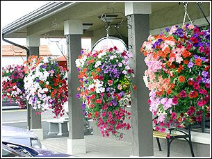 Hanging Baskets For Front Porch Oh So Pretty Love Summer My Garden Pinterest Front