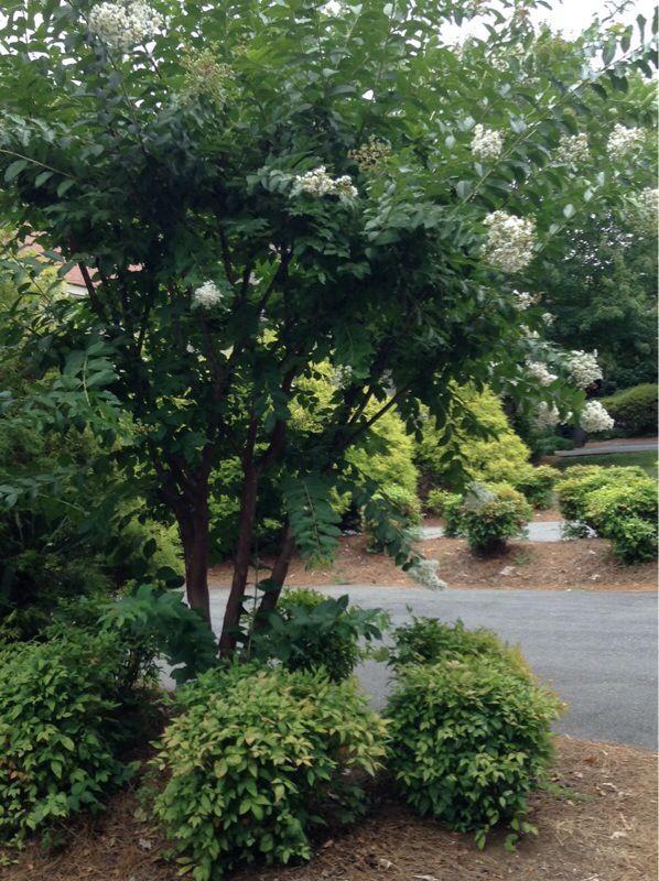 Free Plant Identification Small landscape trees