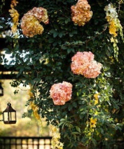 lush garden- ivy, hydrangeas, lanterns!  http://www.olamweddings.com