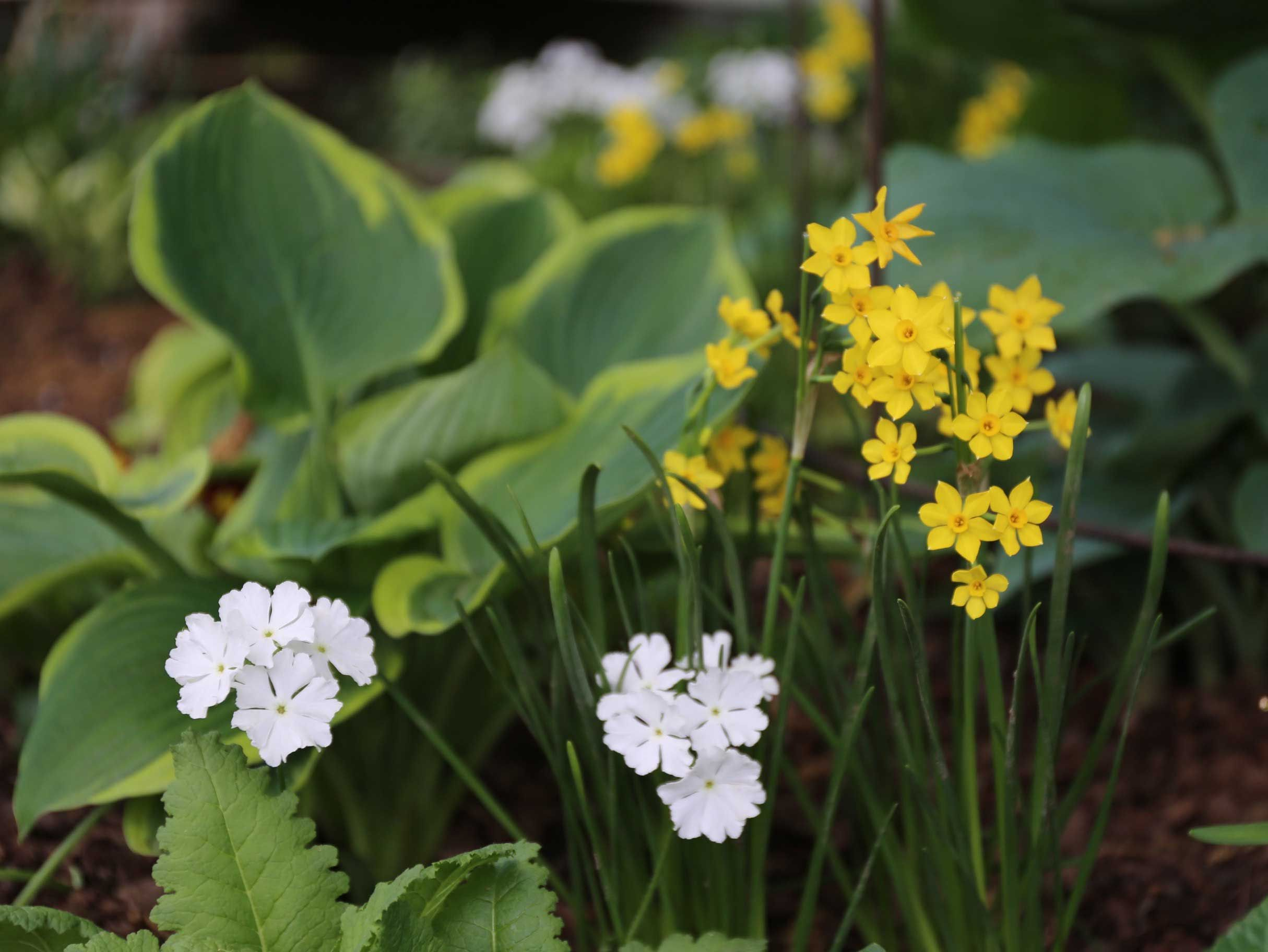 12 Best Companion Plants For Hostas Garden Garden Bulbs Garden