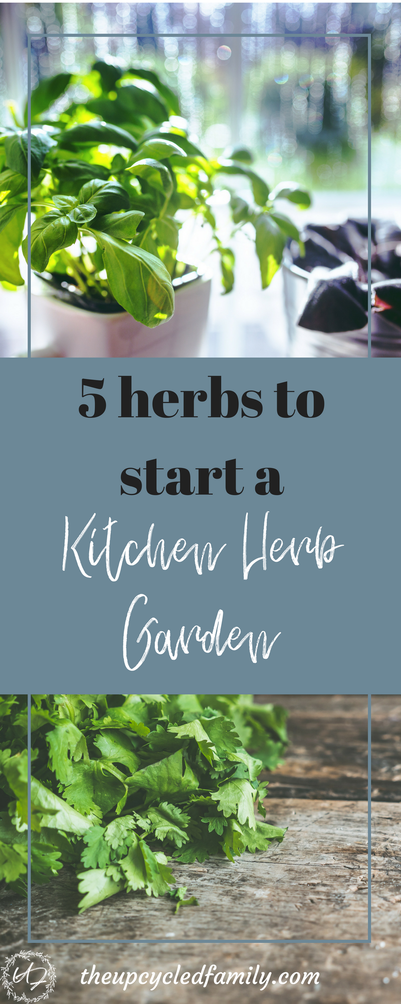 5 easy herbs to grow in your kitchen herb garden | Kitchen herb ...