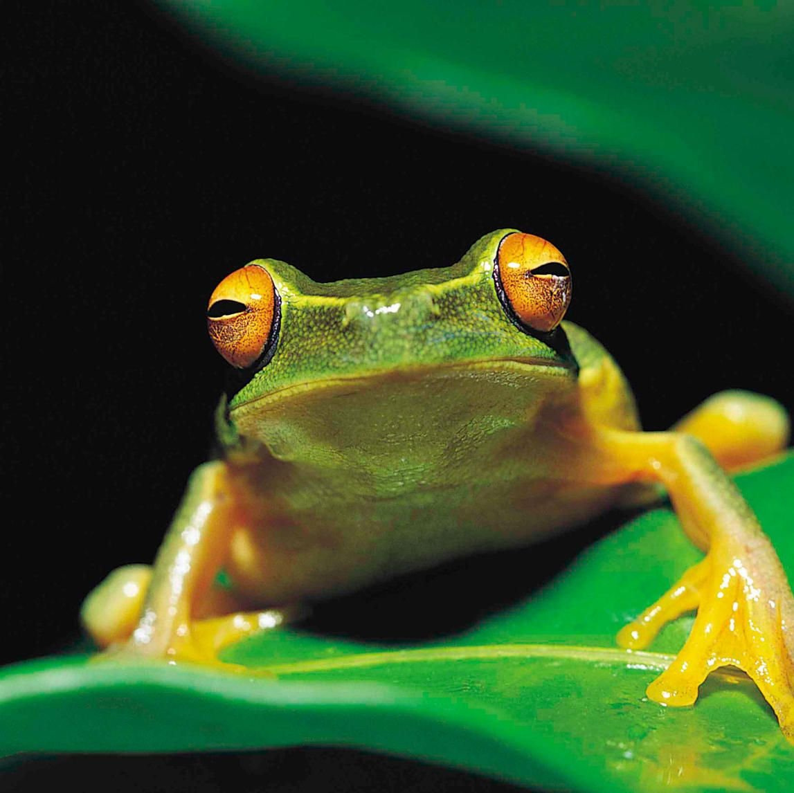 Discovery shows watch now for free amphibians