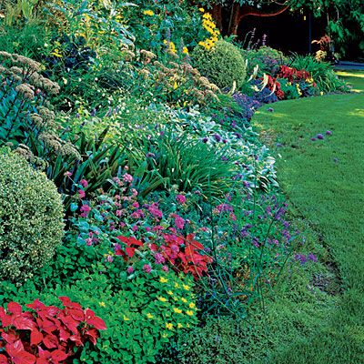 20 Garden Border Designs Plants, Sunnies and Garden borders