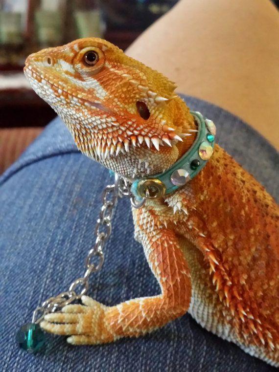 CUSTOM Juvenile to subadult bearded dragon collar with lanyard ...