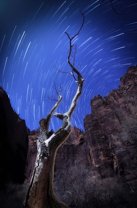 Temple Tree Star Trails - stock photo
