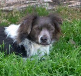 Adopt Freckels On Dog Mixes Dogs German Shepherd Dogs