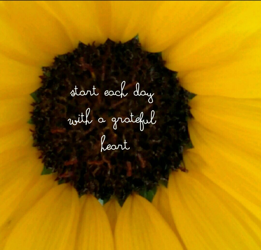 Pin by joan stephens on sunflower smiles pinterest sunflowers