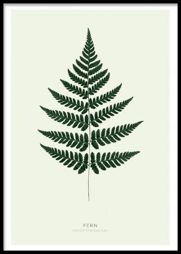 Green Fern Plakat Botanisk Plakat Bregner Plakater