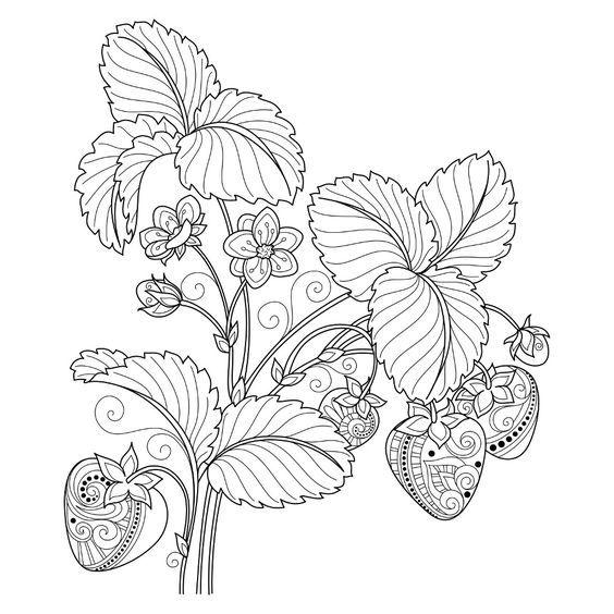 Pin von Barbara auf coloring fruit, vegetable   Pinterest