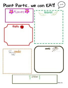 edible plant parts graphic organizer for student use science social studies parts of a. Black Bedroom Furniture Sets. Home Design Ideas