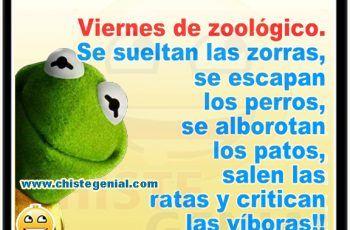Chistes Cortos Buenos Y Divertidos Viernes De Zoológico Humor Memes Poses