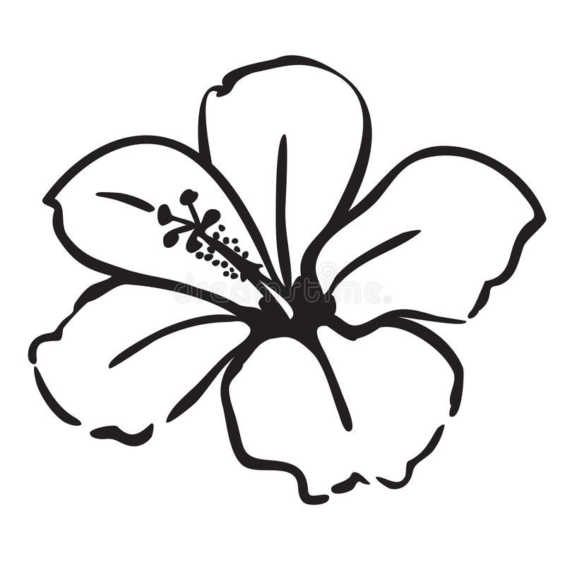 Hibiscus Flower Simple Line Drawing Vector Illustration Isolated