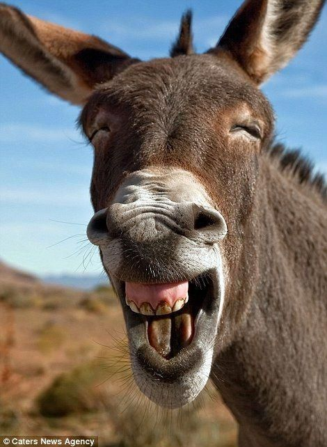 Hilarious images capture animals pulling funny faces