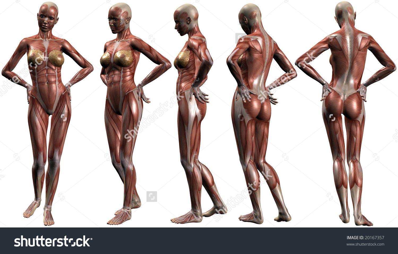 Pin von Brandon Wainwright auf Human form | Pinterest