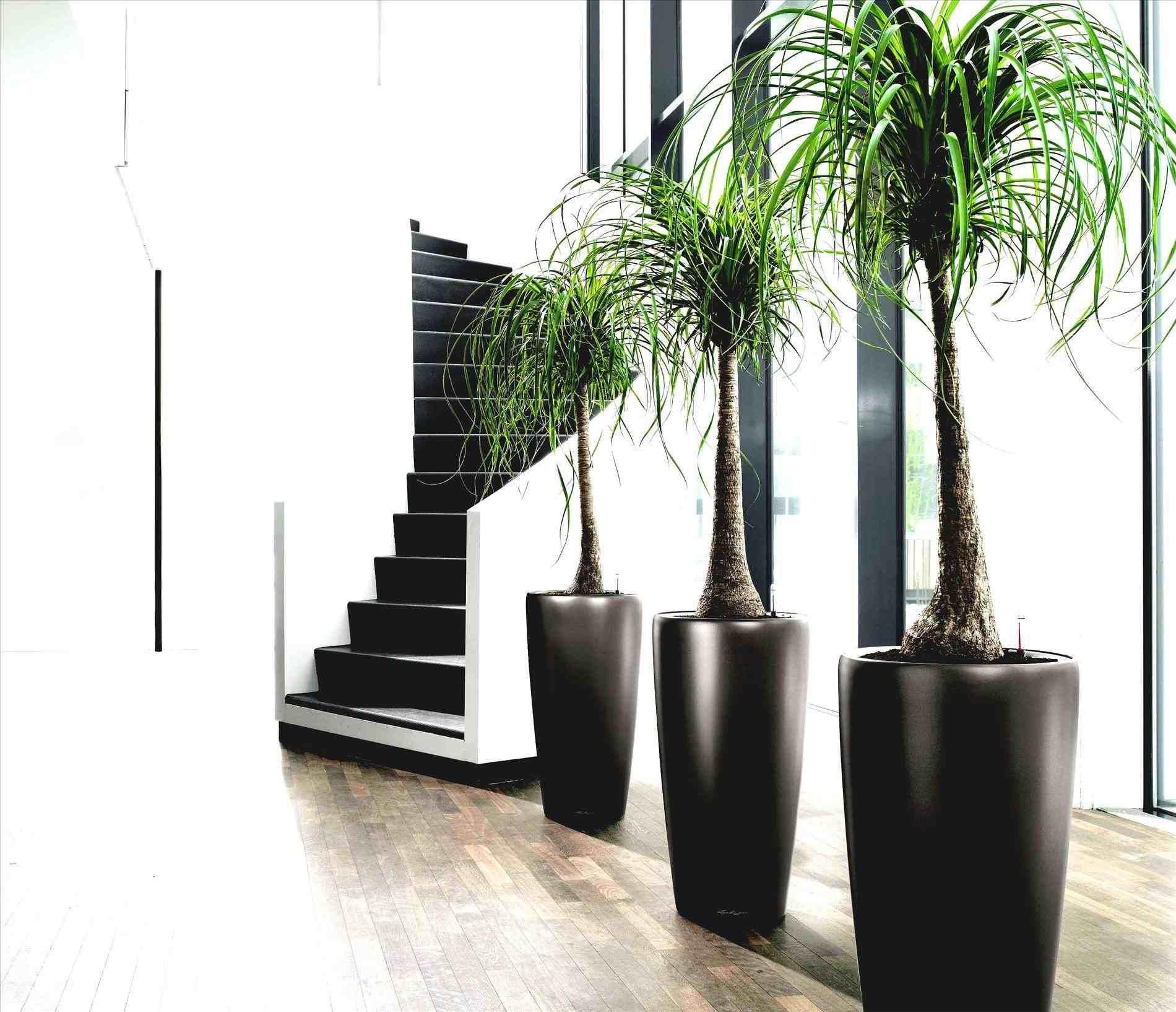 Architectural Indoor Plants