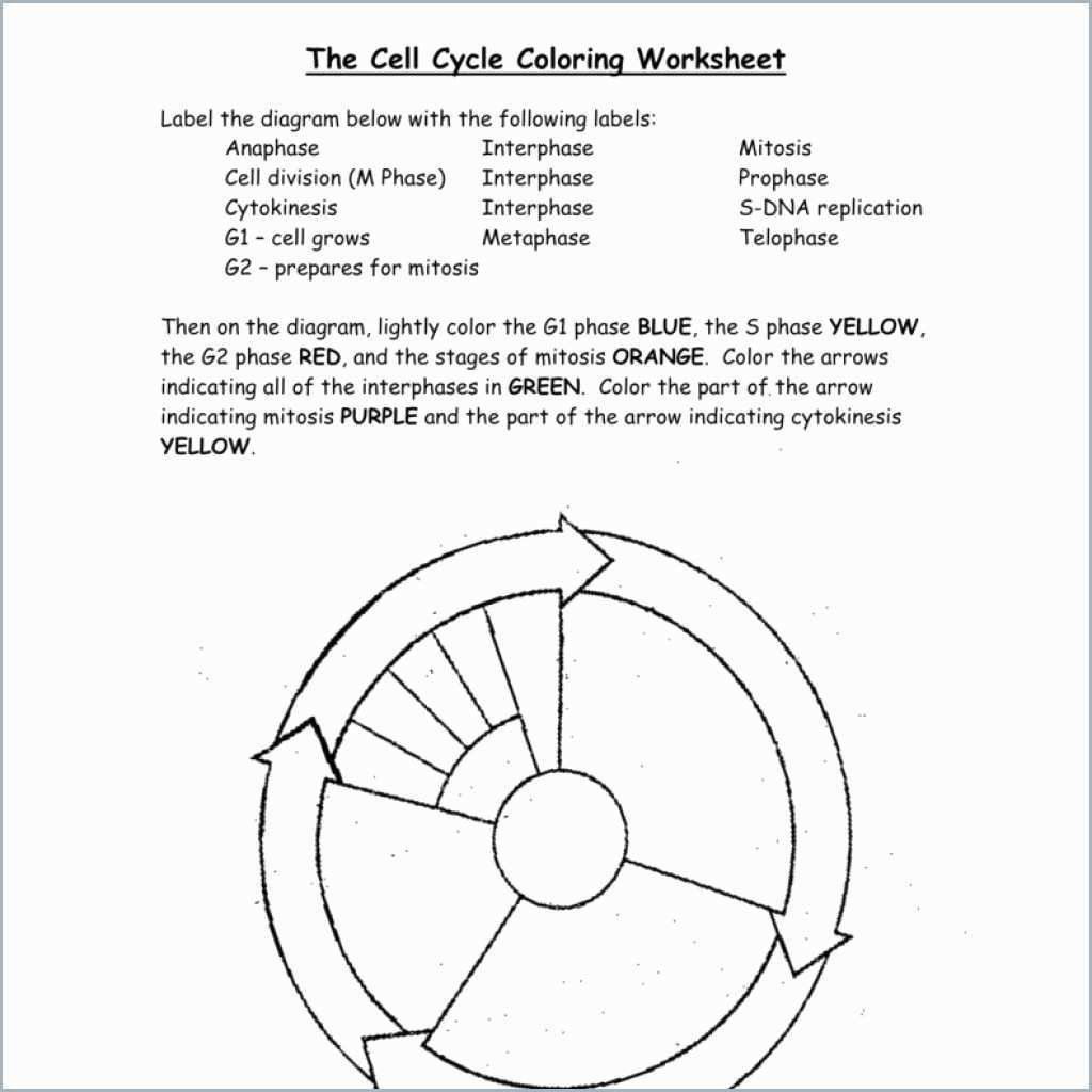 Cell Cycle Coloring Worksheet Best Of Cell Cycle Drawing