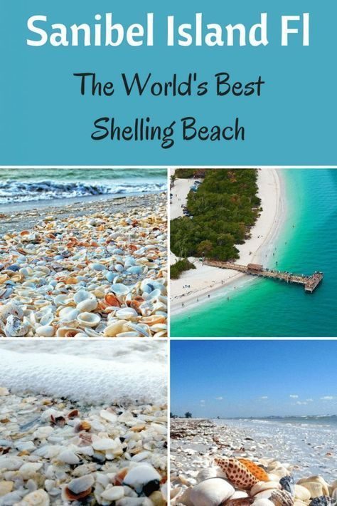 Sanibel Island shelling is some of the best shelling you can find anywhere. It provides one of the best shelling beaches in the world. Check out the map!