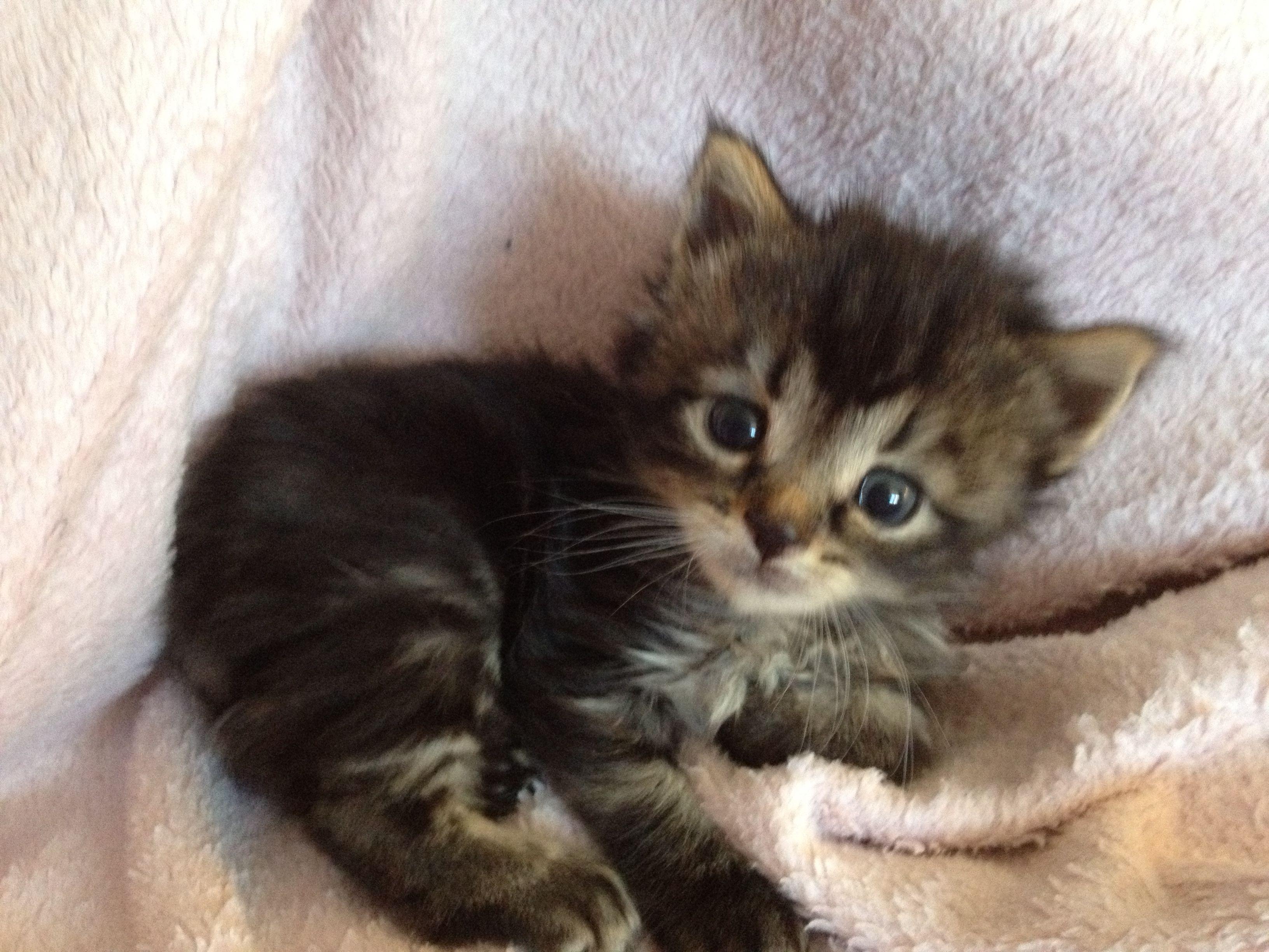 3 week old barn kitten. So cute!
