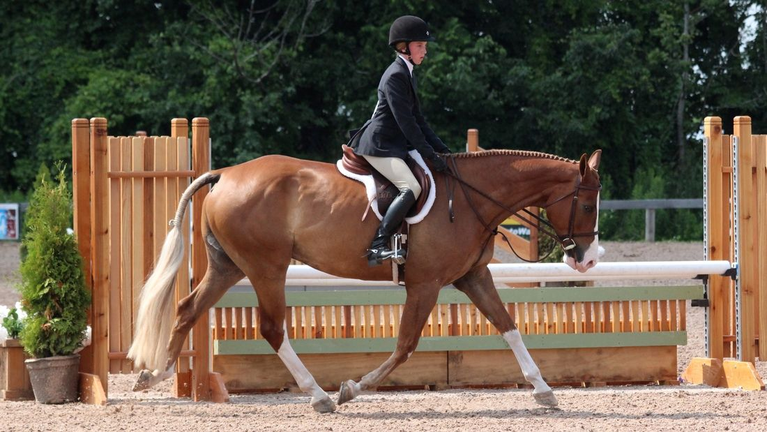 Picture of a horse competing in the Hunter Under Saddle event