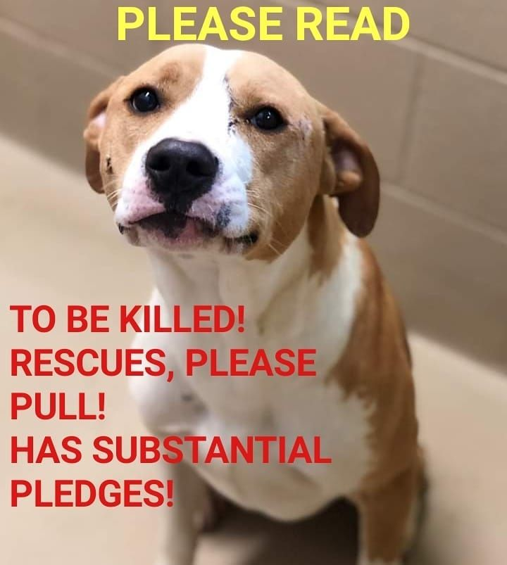 Pin On Please Adopt