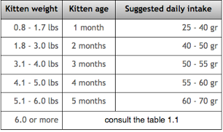 persian kittens food
