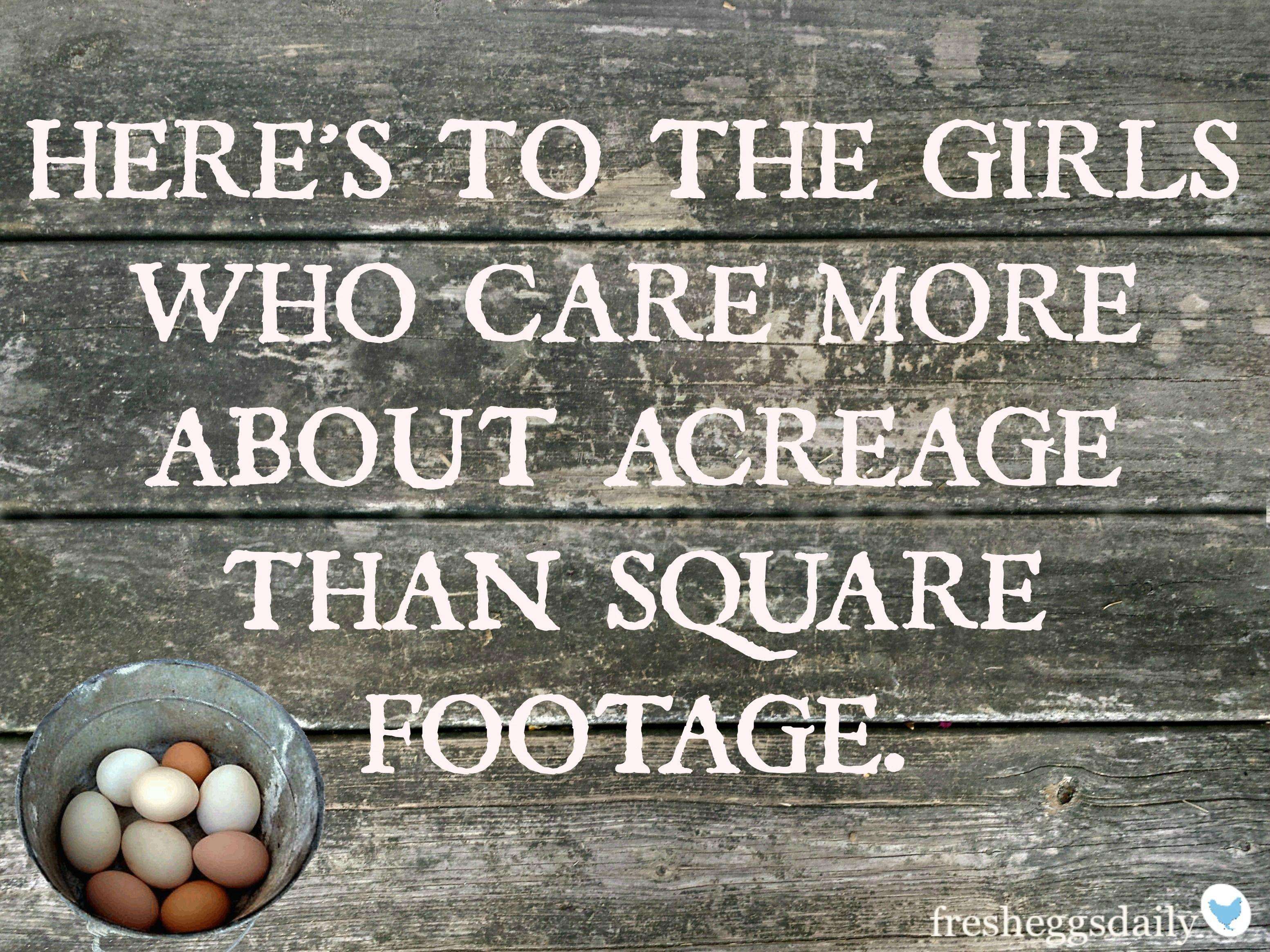 Chicken Phrases: Chickens Backyard, Country