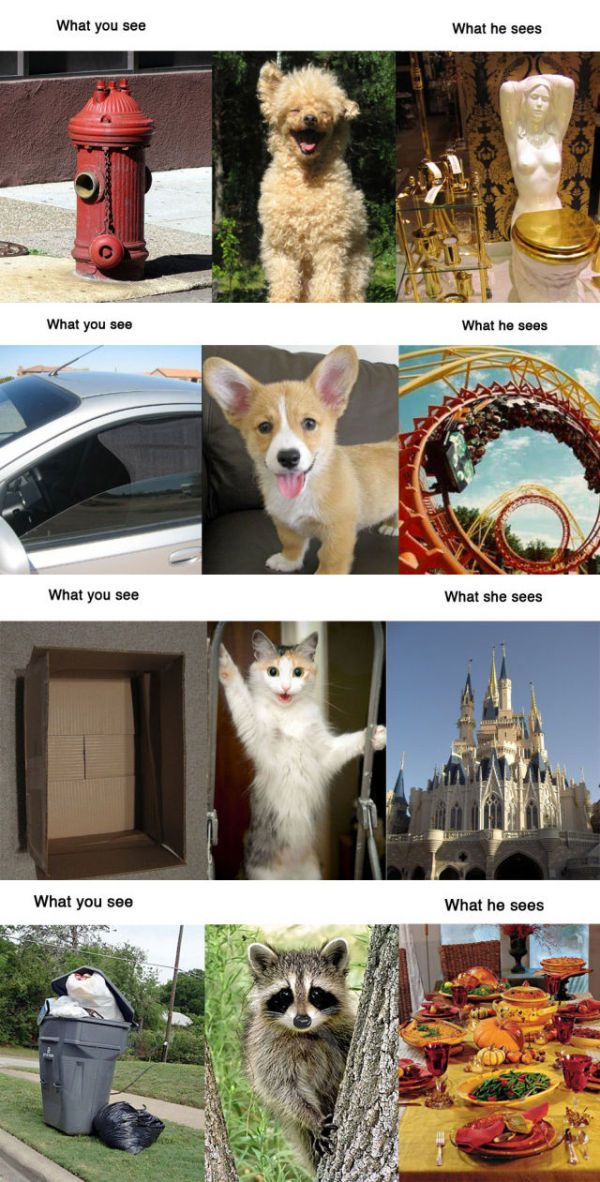 What They Really See Animals Domestic Dog Pets