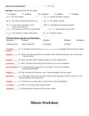mitosis_worksheet-KEY.doc - MITOSIS WORKSHEET Name: ANSWER ...