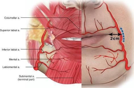 Image Result For Lip Vascular Anatomy Botox Pinterest Lips