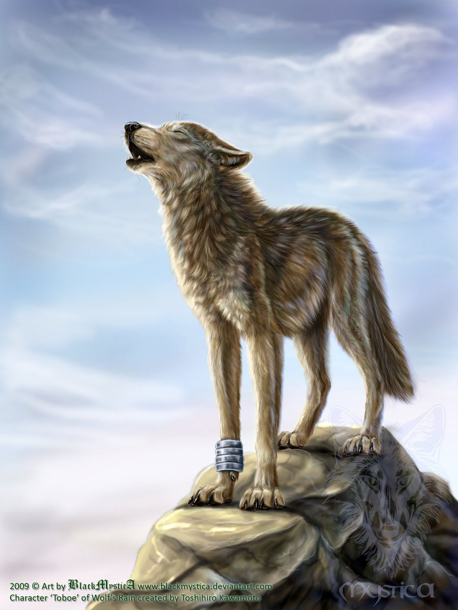 Toboe From Wolf S Rain By Blackmystica On Deviantart Wolf S Rain Wolf Wolf Art