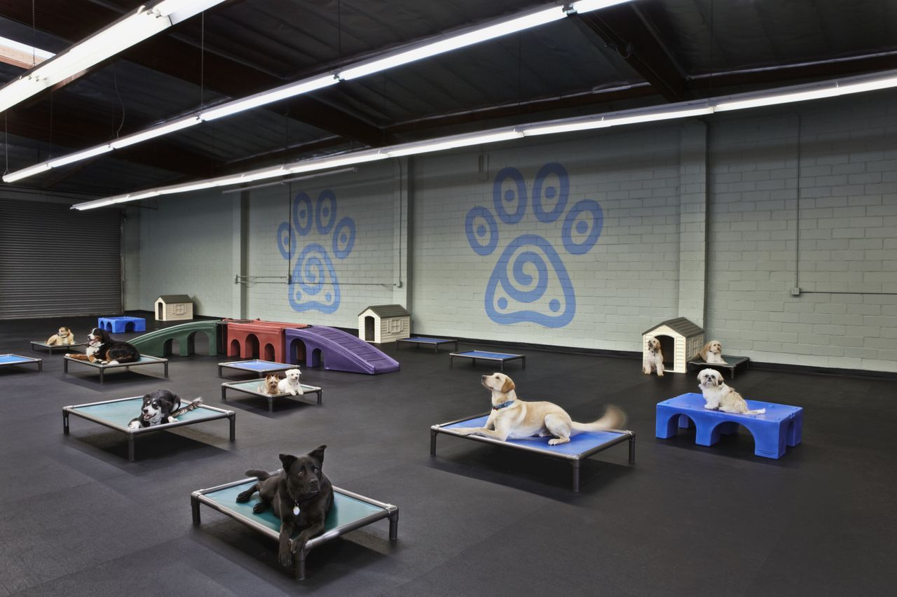 Is puppy school best for you? The value of early on canine
