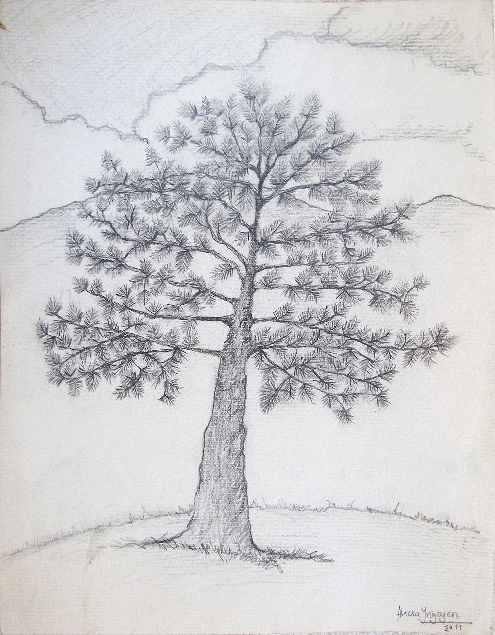 Pino Lapiz Sobre Cartulina Kimberly Tamano Carta Dibujos A Tinta Dibujos Drawing