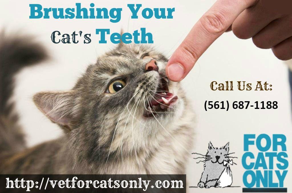 Feline Surgery in West Palm Beach, FL Dog teeth, Dog