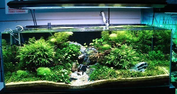 Planted Aquarium Aquarium Fresh Water