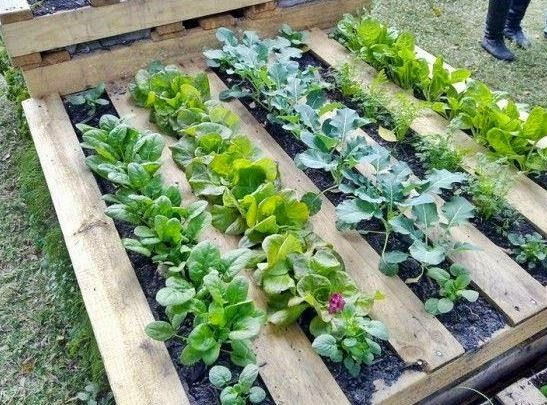 For Raised Garden Purposes A Pallet Can Be Laid Flat On The Ground