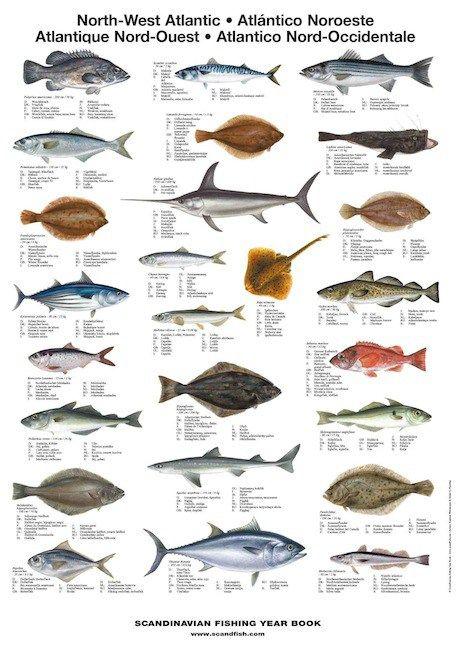 La Tene Maps Mediterranean Sea Fish Sea Fish Types Of Fish Fish