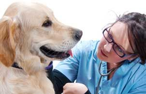 Vet Tech School - Veterinary Technician Degree Online | Penn