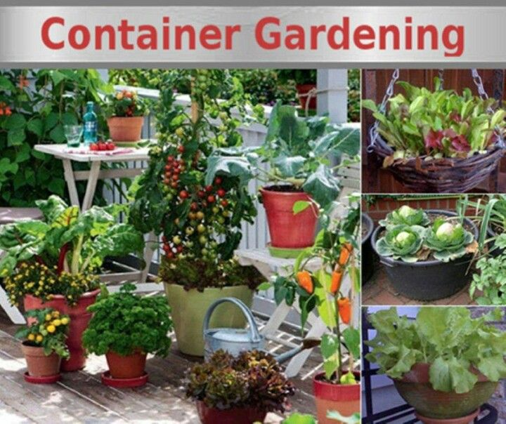 If you have no room for a large garden - you can start a small container garden