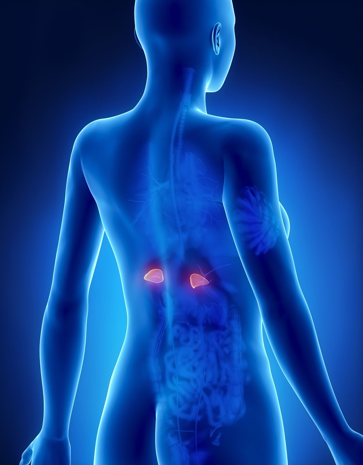78+ images about adrenal fatigue on pinterest   fibromyalgia
