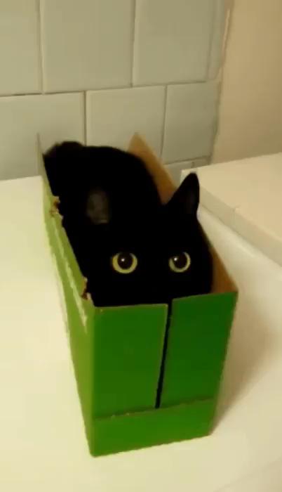 Guck-Guck - #Katze # Katzen #kitty #Miau #Kätzchen #kittens  Das schönste Bild für  decorating with plants ,  - #allergictocats #catcat #cattattoo #catwallpaper #catsandkittens #crazycats #dogcat #GuckGuck #petscats
